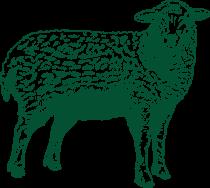 Ilustração de uma ovelha